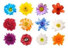 Grande selezione di vari fiori isolati su fondo bianco Fotografia Stock Libera da Diritti
