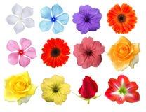 Grande selezione di vari fiori isolati su fondo bianco Immagini Stock