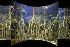 Grande serbatoio dell'acquario fotografia stock