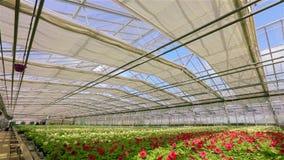 Grande serra moderna per i fiori crescenti Tetto di vetro automatizzato moderno in una serra contro lo sfondo di archivi video