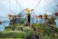 Grande serre chaude avec des fleurs Belles fleurs image stock