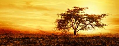 Grande siluetta africana dell'albero sopra il tramonto Fotografia Stock