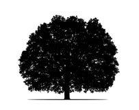 Grande siluetta maestosa dell'albero di quercia immagini stock libere da diritti