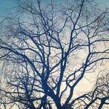 Grande siluetta nuda dei rami di albero fotografia stock libera da diritti