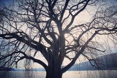 Grande siluetta nuda dell'albero Sole sul fondo ghiacciato del lago Fotografie Stock