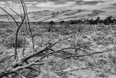 Grande sosta nazionale delle dune di sabbia, CO immagini stock libere da diritti