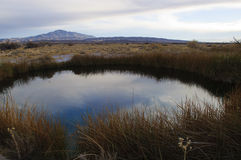 Grande source dans des prés Nevada de cendre Image libre de droits