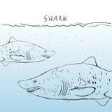 Grande squalo bianco due nell'acqua abbozzo Profilo nero su una b Immagine Stock