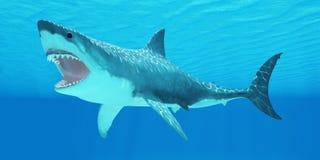 Grande squalo bianco subacqueo Fotografie Stock Libere da Diritti