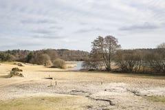 Grande stagno di Frensham, terreno comunale di Frensham, Waverley, Surrey immagine stock libera da diritti