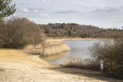 Grande stagno di Frensham, terreno comunale di Frensham, Waverley, Surrey fotografia stock