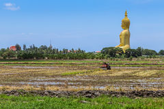 Grande statua dorata di Buddha che si siede con l'agricoltore della priorità alta che lavora al giacimento del riso Fotografia Stock