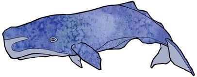 Grande struttura blu dell'acquerello del capodoglio bella illustrazione di stock
