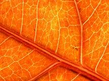 Grande struttura del foglio di autunno Fotografie Stock