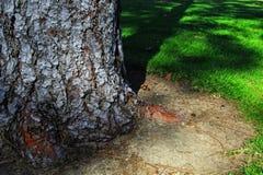 Grande struttura dell'albero con erba verde Immagine Stock