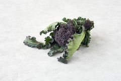 Grande tête de brocoli pourpre avec des feuilles Images libres de droits