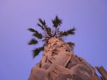 Grande T della palma Fotografie Stock