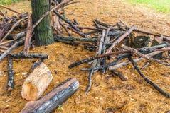 Grande taglio di rami del pino nel parco immagini stock