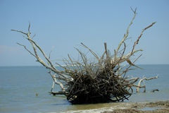 Grande Talbot Island Immagini Stock