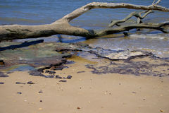 Grande Talbot Island Fotografie Stock