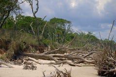 Grande Talbot Island Immagine Stock