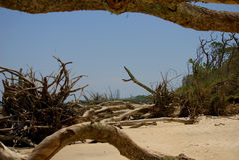 Grande Talbot Island Fotografia Stock