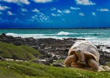 Grande tartaruga al paesaggio del mare edge.tropical Immagini Stock