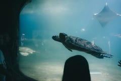 Grande tartaruga in un carro armato di pesce ad un aquapark immagini stock libere da diritti