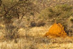 Grande termitary in savanna Parco nazionale di Samburu, Kenya immagini stock libere da diritti