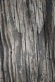 Grande textura de madeira de vista Fotos de Stock