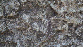 Grande texture en pierre Photos libres de droits