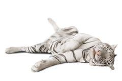 Grande tigre bianca Fotografie Stock Libere da Diritti