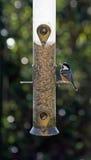 Grande tit ad un alimentatore dell'uccello fotografia stock