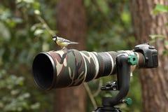 Grande tit su un obiettivo di 500mm Fotografia Stock