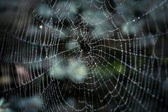Grande toile d'araignée couverte de baisses Images libres de droits