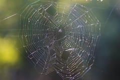 Grande toile d'araignée couverte de baisses Images stock
