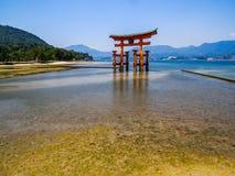 Grande torii di galleggiamento del santuario shintoista di Itsukushima Fotografie Stock Libere da Diritti