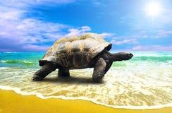 Grande tortue Photographie stock libre de droits