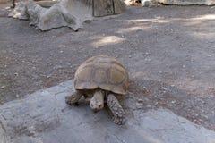 Grande tortue en parc Photo stock
