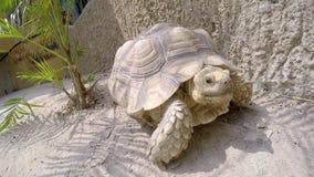 Grande tortue rampant sur le sable dans le zoo clips vidéos