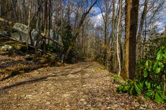 Grande traînée de crique, Great Smoky Mountains images stock