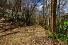 Grande traccia dell'insenatura, Great Smoky Mountains immagini stock