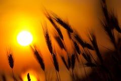 Grande tramonto di estate fotografie stock