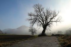 Grande tri nel fogg Fotografie Stock