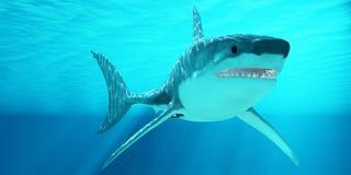 Grande tubarão branco com raios de sol Imagem de Stock