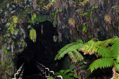 grande tubo del thurston della lava dell'isola Fotografia Stock