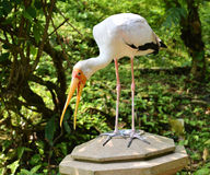 Grande uccello Fotografia Stock