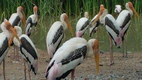 Grande uccello del becco lungo fotografia stock libera da diritti