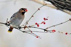Grande uccello di pace Immagine Stock