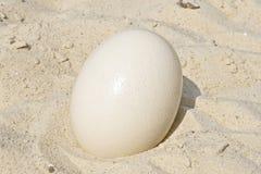 Grande uovo dello struzzo. Fotografie Stock Libere da Diritti